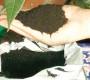 জীবাণু সার
