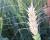 অনাকাংখিত বালাই অনুপ্রবেশের ঝুকিতে বাংলাদেশঃ উদ্ভিদ সঙ্গনিরোধ কার্যক্রম ও আমাদের জৈবনিরাপত্তা